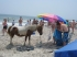 Wild horse checking out their boogie board and umbrella